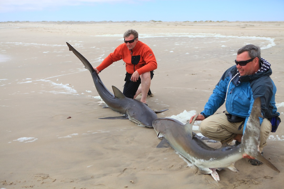 shark fishing report nj shore