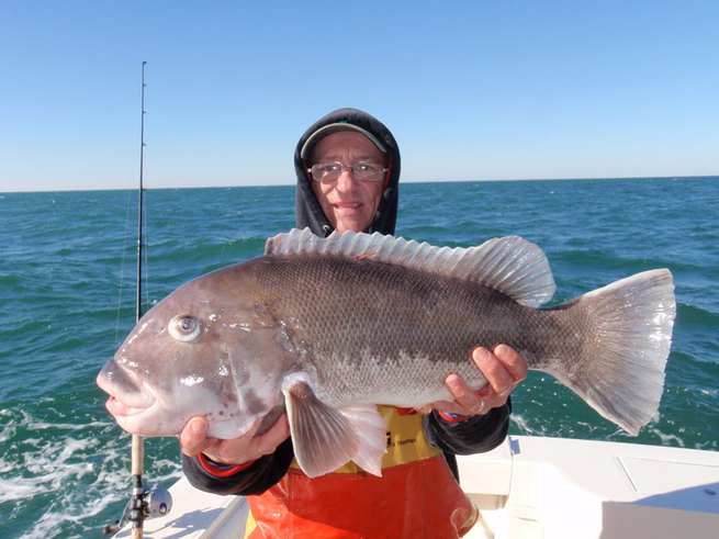 Tautog today fishing report january 12 2014 fishtrack com for Fishing conditions today