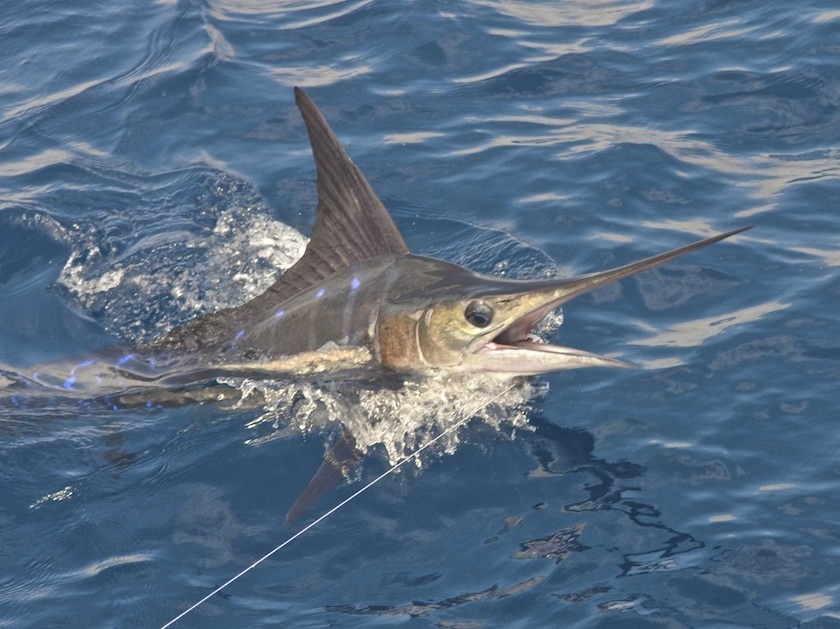 East cape crazy crazy fishing report may 25 2014 for Cape may fishing report