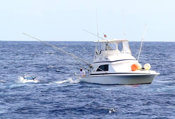 Marlin bite continues in cape verde fishing report may for Cape may fishing report