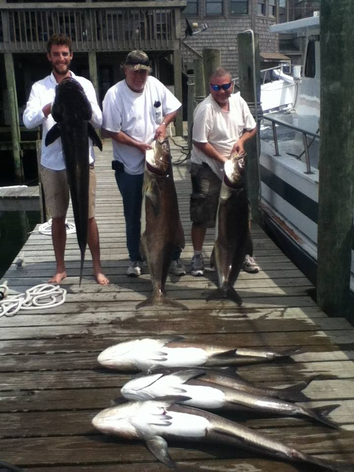 Hatteras cobia fishing report may 15 2014 fishtrack com for Hatteras fishing reports