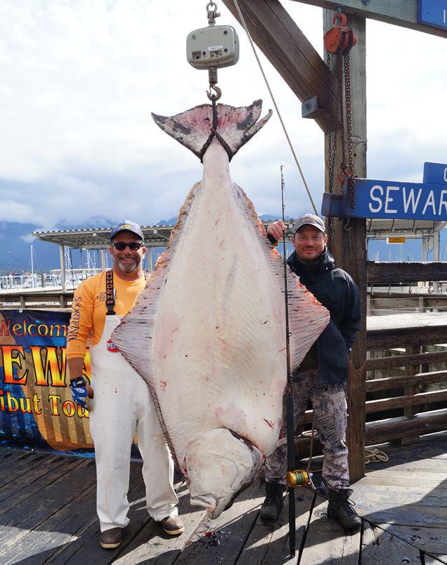 Derby winning halibut fishing report june 30 2014 for Seward halibut fishing