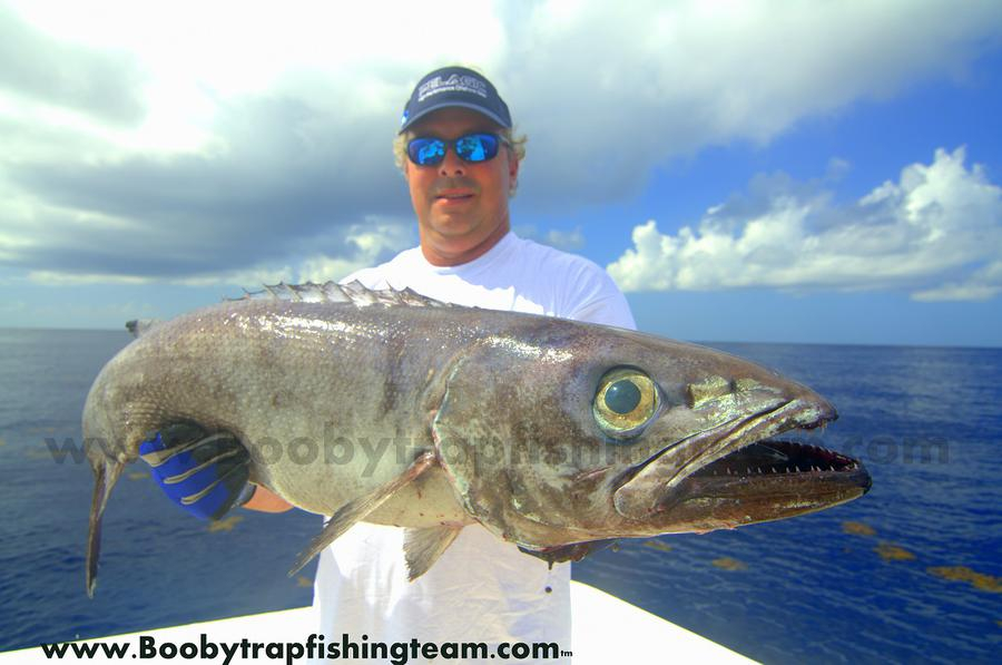 Olifish and squid in gulf fishing report august 26 2014 for Gulf coast fishing report