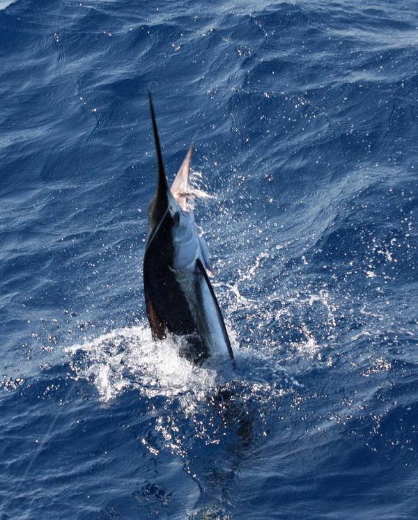 Va beach offshore fishing report september 02 2014 for Va beach fishing
