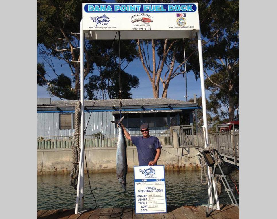 Dana point wahoo fishing report october 15 2014 for Dana point fish report