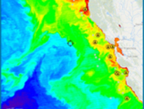 Impressive Chlorophyll shot showing a push of water about 90 miles west of San Francisco.