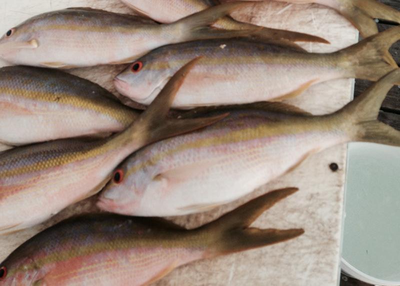 Florida keys snapper fishing report december 10 2014 for Middle keys fishing report