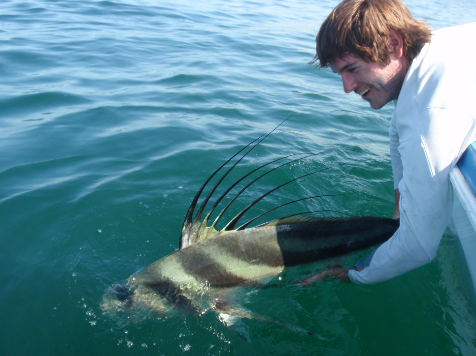 Cabo fish report april 13 19 2015 fishing report for Rooster fish cabo