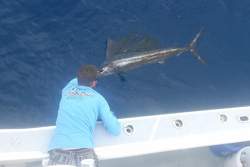 Palm beach weekend outlook fishing report april 23 2015 for Juno fishing report