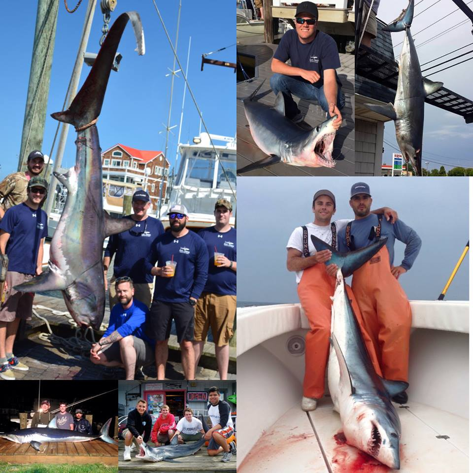Jersey sharking fishing report june 08 2015 fishtrack com for Fishing report nj