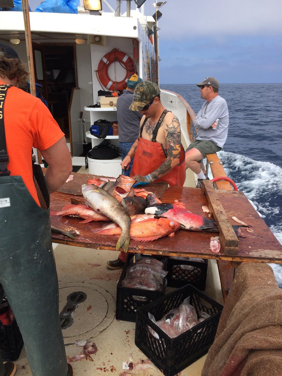 San nicolas island yellowtail fishing report june 18 for Long beach fishing charters