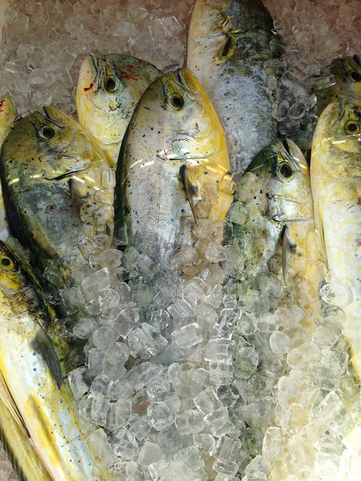 Florida keys mahi fishing report july 02 2015 for Middle keys fishing report