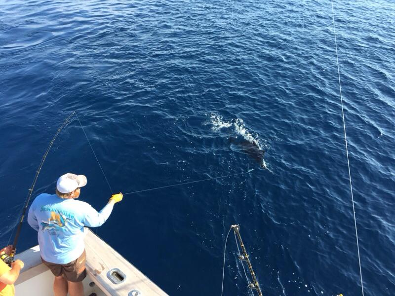 Virginia beach billfish fishing report august 19 2015 for Fishing report va