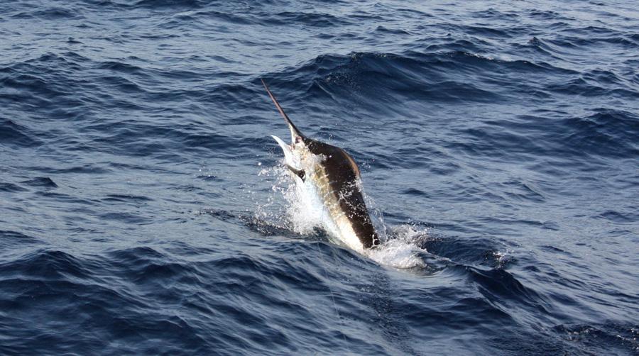 Blue sunday in virginia beach fishing report august 31 for Va beach fishing report