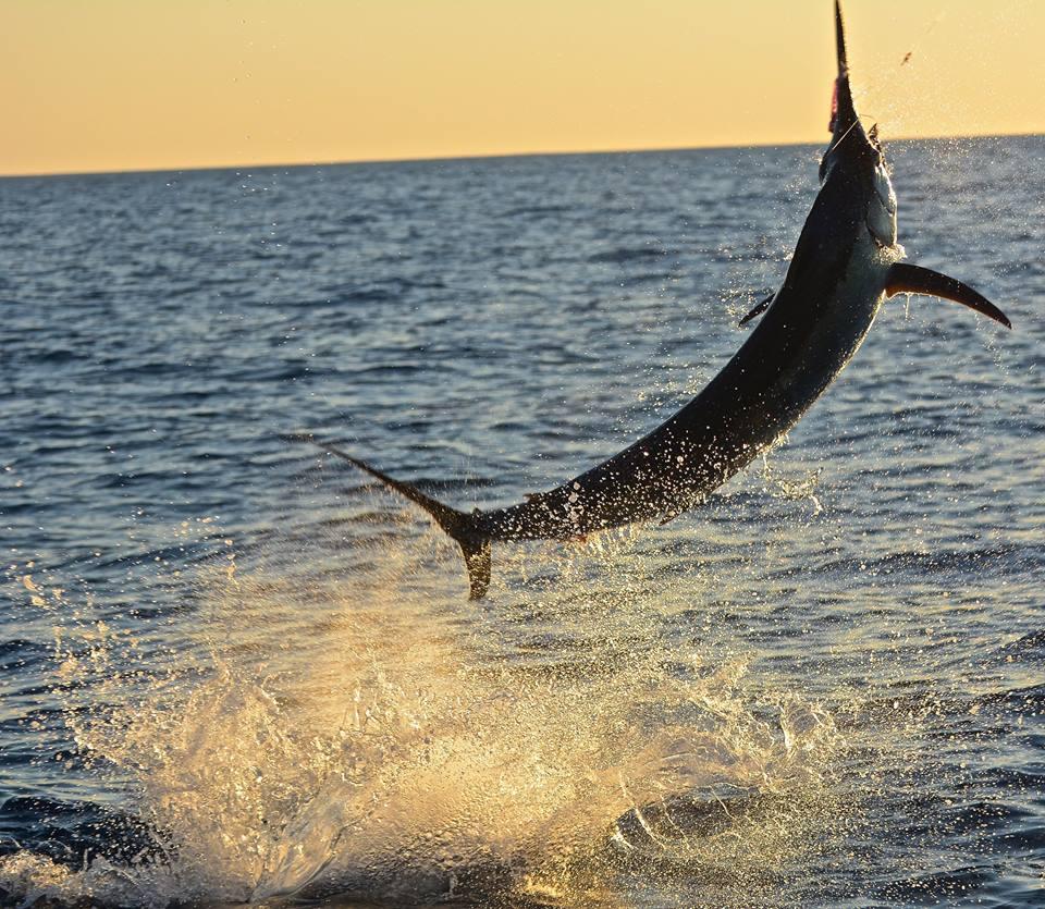 Grand slam for peak sportfishing fishing report for Peak fishing times for today