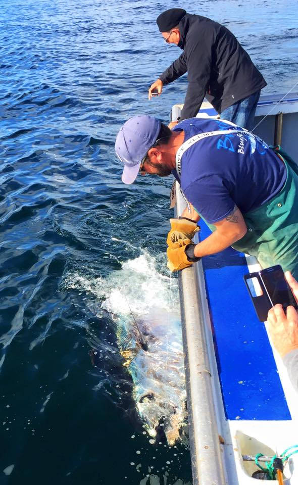Giant tuna fishing report october 06 2015 fishtrack com for 976 tuna fish report