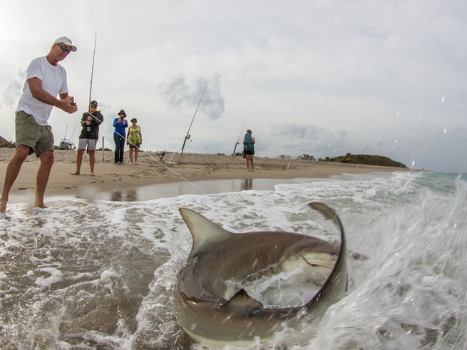 Southeast spinner shark migration fishing report march for Southeast florida fishing report