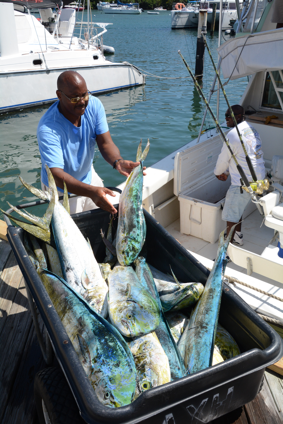Virgin islands game fishing club 39 s 21st annual dolphin for Virgin islands fishing