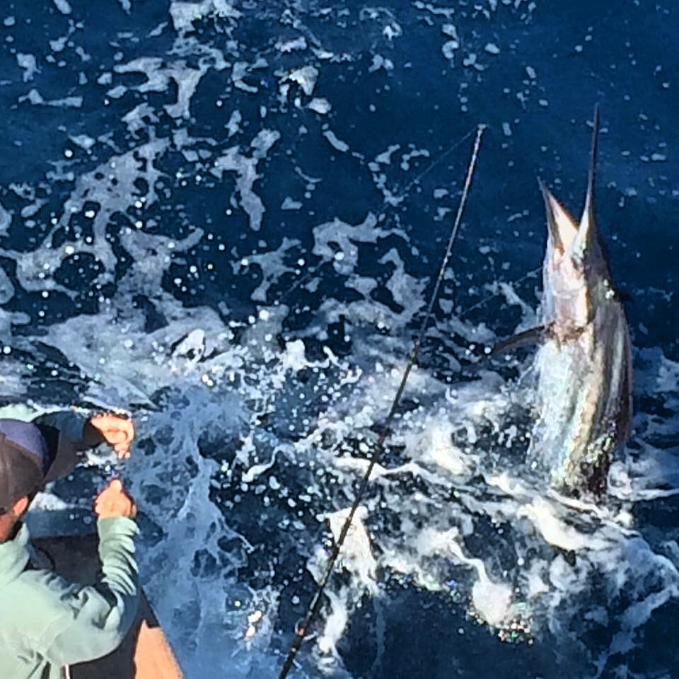 Florida keys february update fishing report march 01 for Middle keys fishing report