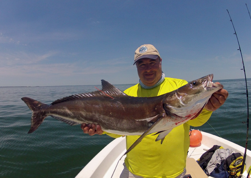 Va beach father 39 s day cobia fishing report june 20 2016 for One fish two fish va beach