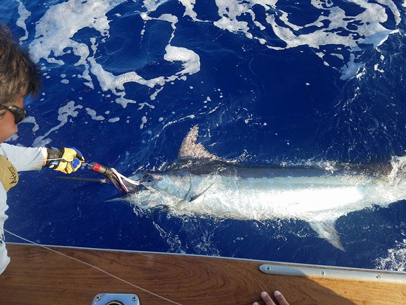 Kona offshore update fishing report september 29 2016 for Hawaii fishing report