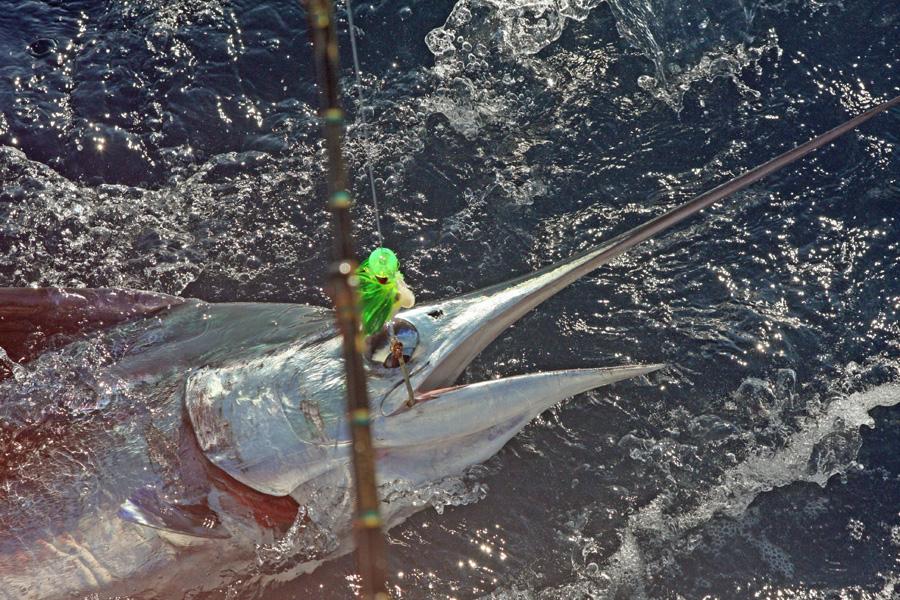 Va beach science trip fishing report september 12 2016 for Va beach fishing report