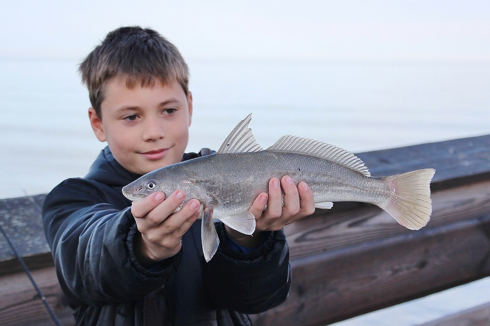 Jennette 39 s pier in nags head fishing report november 28 for Obx fishing reports