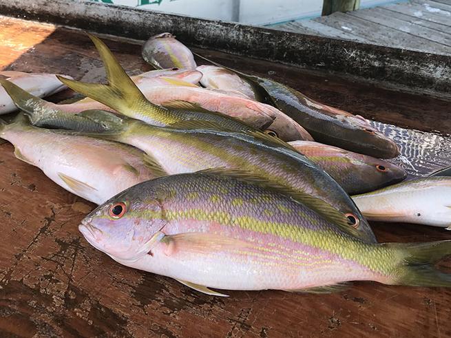 Florida keys offshore fishing report december 29 2016 for Middle keys fishing report
