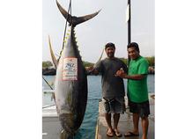 ?Shawn Takaki and Clarence Minamishin Jr. boated a 242-pound ahi? to score Kona's biggest April yellowfin tuna in memory. Charter Desk photo.