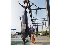 Cindy Cary and Capt. Guy Terwilliger boated a 925-pound blue marlin while fishing on Cindy's 23-foot skiff Cindy Lou.  After the duo hooked the fish on a live bait, Guy fought it for 2-1/2 hours as Cindy ran the boat.  It is Kona's largest blue in over a