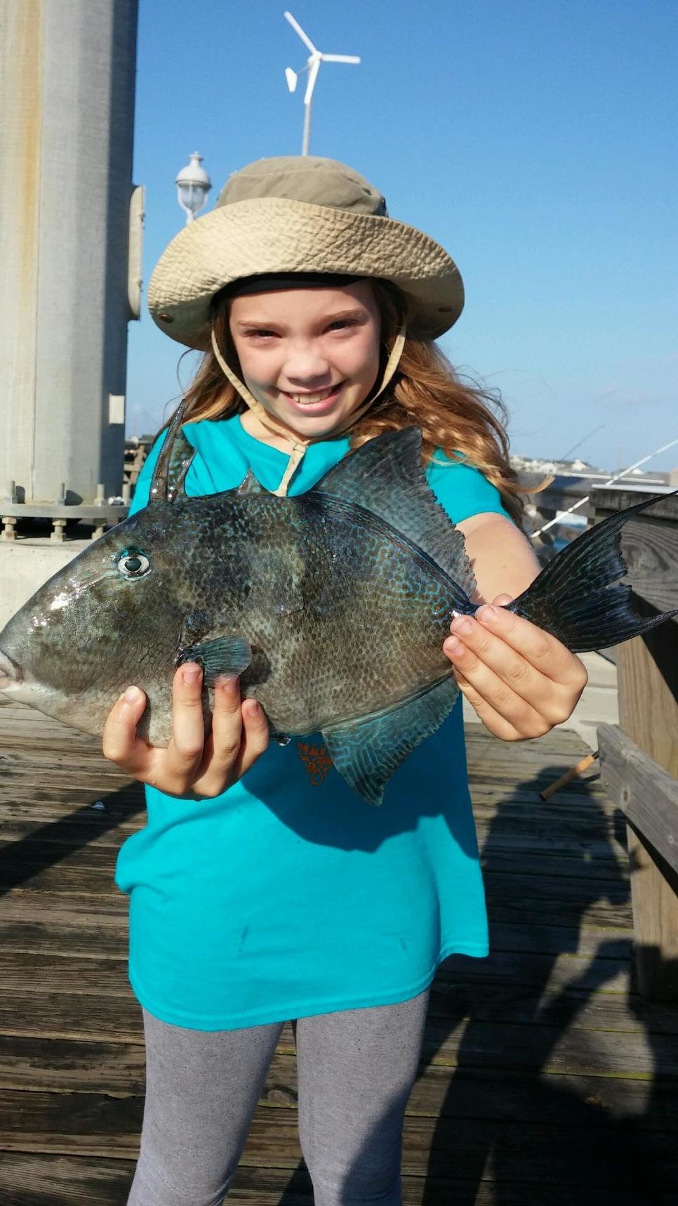 Jennette 39 s pier fishing report july 12 2017 fishtrack com for Jennette s fishing pier