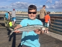 Southeast us fishing reports fishtrack com for Southeast florida fishing report