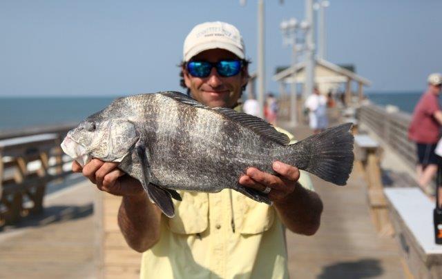 Jennette 39 s pier fishing report october 18 2017 for Jennette s pier fishing report