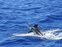Hawaii Fishing Reports | FISHTRACK COM